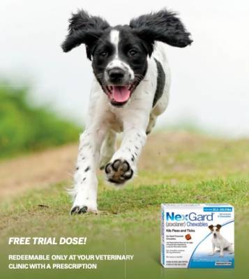 Free Trial Dose of NexGuard Chewables
