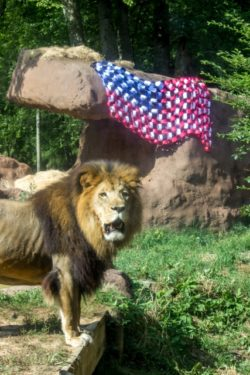 Memorial Day: Free Birmingham Zoo Admission For Veterans