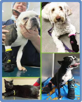 Request Free Medipaw Boot Sample For Veterianian Clinics