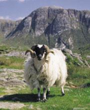 Request Free Murphy of Ireland Tweed Swatch