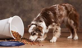 Free Sample Of Aussie Dog Food